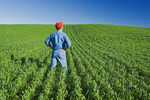 a man looks out over a mid-growth wheat field near Holland, Manitoba, Canada