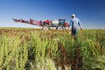 a man scouts weeds in field next to a high clearance sprayer, near Moreland, Saskatchewan, Canada