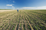 a man scouts an early growth canola in a zero till grain stubble field, Tiger Hills, Manitoba, Canada
