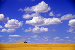 cumulus clouds, spring wheat harvest, Tiger Hills, Manitoba, Canada