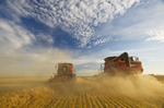 two combine harvesters work a field of swathed oats near Dugald,  Manitoba, Canada
