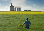 a man looks out over podded and blooming canola fields with an inland grain terminal in the background, near Brunkild, Manitoba, Canada
