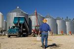 a farmer with a lunch box walks towards his truck while unloading grain into storage bins near Dugald, Manitoba, Canada