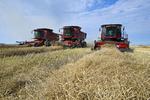 three combine harvesters work in a canola field, near Dugald, Manitoba, Canada
