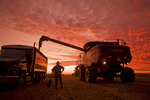 a farmer stands with a shovel at sunset as a combine harvester empties oats into a truck during the harvest near Dugald,  Manitoba, Canada