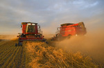 two combines harvest swathed oats near Dugald,  Manitoba, Canada