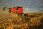 a combine harvester works on a swathed oat crop near Dugald,  Manitoba, Canada