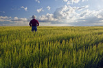 a man looks out over a barley crop and a sky with developing cumulonimbus clouds, Tiger Hills, Manitoba, Canada