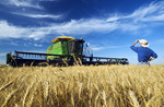 a farmer with his combine harvester in the background, looks out over his harvest ready winter wheat crop near Winkler, Manitoba, Canada