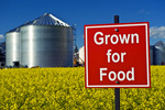 grown for food sign in bloom stage canola field with grain storage bins in the background,  near Dugald, Manitoba, Canada