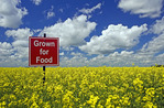themes in agriculture-bloom stage canola field with sign,  near Carey, Manitoba, Canada
