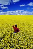 a man looks out over a bloom stage canola field that stretches to the horizon, Tiger Hills, Manitoba, Canada