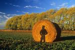 a shadow of a farmer  looking out over his alfalfa field near Winnipeg, Manitoba, Canada