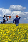 a man looks out over a bloom stage canola field with oil pumpjack in the background, near Carlyle, Saskatchewan, Canada