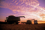 a combine harvester unloads winter wheat into a farm truck during the harvest, near Winkler, Manitoba, Canada