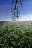 a center pivot irrigation system irrigates potatoes, near Holland, Manitoba, Canada