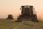two combine harvesters work a field of swathed spring wheat,  near Dugald, Manitoba, Canada