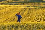 a man looks out over a barley field,  near Conorach, Saskatchewan, Canada