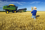 a man checks a harvest ready winter wheat crop with a combine harvester in the background, near Kane, Manitoba, Canada