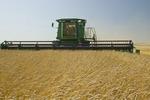 a combine harvester work a field of spring wheat, near La Salle, Manitoba, Canada