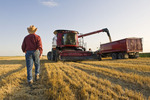 motion study of a man walking towards a combine harvesters a it empties spring wheat into a farm truck,  near Dugald, Manitoba, Canada