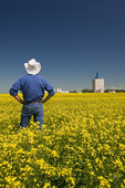 a man looks out over a blooming canola field with an inland grain terminal in the background, near Fannystelle, Manitoba, Canada