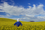 a man looks out over a field of bloom stage canola with grain bins in the background,  Tiger Hills, Manitoba, Canada