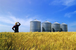 a farmer looks out over his maturing winter wheat crop, with grain bins in the background, Carey, Manitoba, Canada (property/model released)