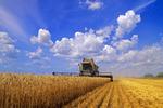 a combine harvests winter wheat near Oakbank, Manitoba, Canada