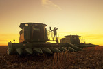 a man on a combine harvester looks out over a partially harvested feed (grain) corn field, near La Salle, Manitoba, Canada