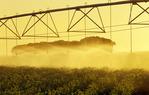 a center pivital irrigation system irrigates potatoes, near Holland, Manitoba, Canada