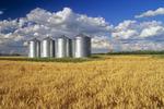 crop storage bins/winter wheat, Carey, Manitoba, Canada