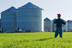 a man looks out over a wheat field with grain storage bins in the background,near Dugald, Manitoba, Canada