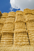 stacked wheat straw bales, near Winnipeg, Manitoba ,Canada