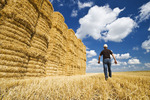 a man walks toward stacked wheat straw bales, sky filled with  cumulus clouds, near Winnipeg, Manitoba ,Canada