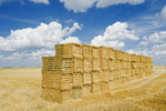 stacked wheat straw bales and sky with  cumulus clouds, near Winnipeg, Manitoba ,Canada