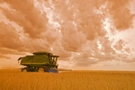 a combine harvests durum wheat, near Ponteix, Saskatchewan, Canada