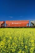 rail hopper cars carrying potash pass a canola field, near Carman, Manitoba, Canada