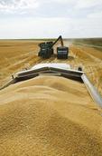 farm truck being filled with durum wheat, near Ponteix, Saskatchewan, Canada