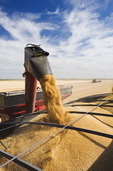 a grain wagon empties durum wheat in to a farm truck. near Ponteix, Saskatchewan, Canada