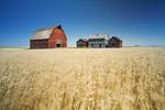 old grain bins and red barn next to wheat field, near Regina, Saskatchewan, Canada