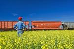 a man looks out as rail hopper cars carrying potash pass a canola field, near Carman, Manitoba, Canada