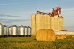 round alfalfa bales and inland terminal, Assiniboia, Saskatchewan, Canada
