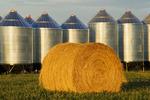 round alfalfa bales and grain bins, Assiniboia, Saskatchewan, Canada