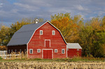 red barn with canola stubble in the foreground, autumn, Grande Pointe,  Manitoba, Canada