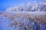 frost covered trees near Beausejour, Manitoba, Canada