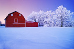 red barn and trees coated with hoarfrost, near Beausejour,  Manitoba, Canada