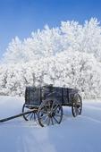 old wagon, hoarfrost on trees, near Cooks Creek, Manitoba, Canada