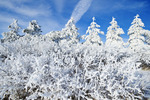 hoarfrost on trees, near Beausejpour, Manitoba, Canada