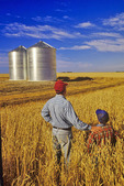 father and son in a maturing wheat crop near Carey, Manitoba, Canada
